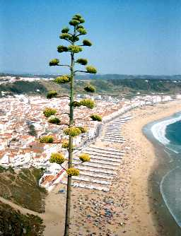 Portugal hotels, resorts, lodging & accommodations